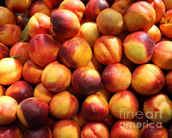 Fresh Nectarines - 5d17815 Print by Wingsdomain Art and Photography