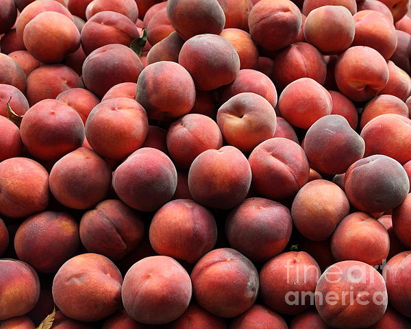 Fresh Peaches - 5d17816 Print by Wingsdomain Art and Photography