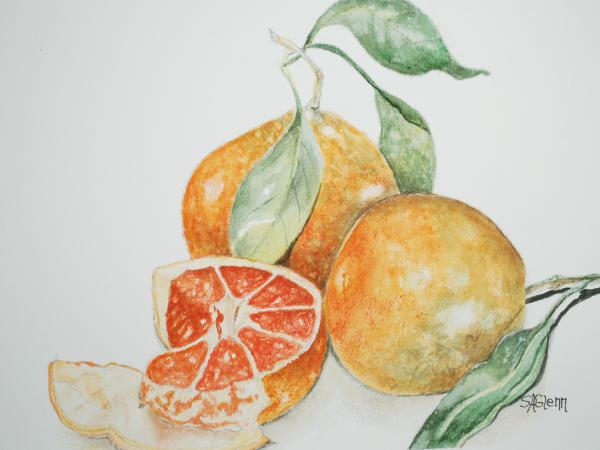 Sue Ann Glenn - Fresh Picked Oranges