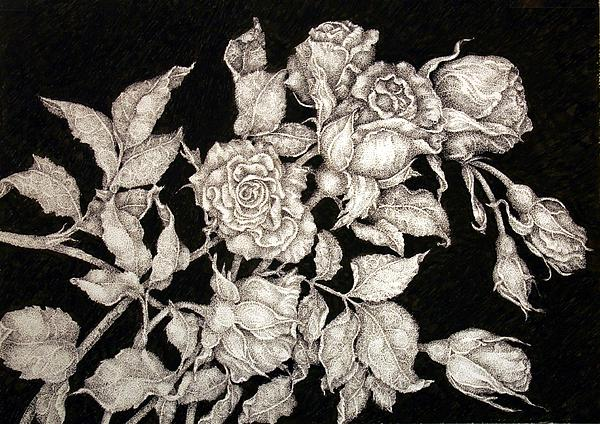 Fresh Picked Roses Drawing