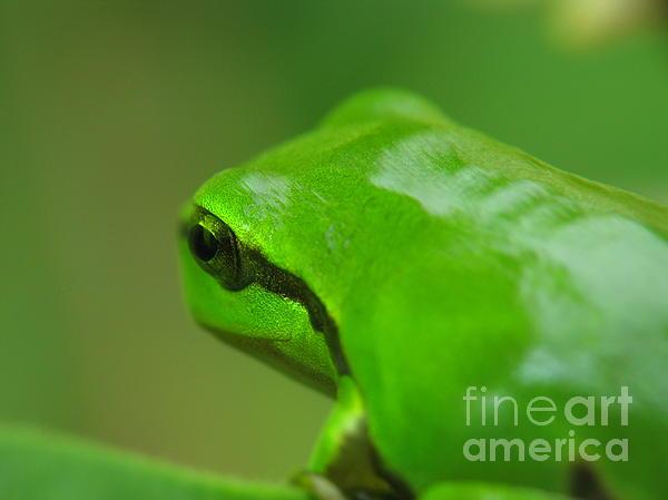 Frog Print by Odon Czintos
