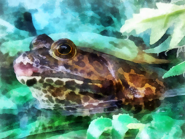 Frog Ready To Be Kissed Print by Susan Savad