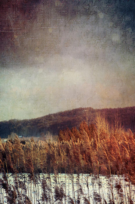 Frosty Field In Late Winter Afternoon Print by Sandra Cunningham