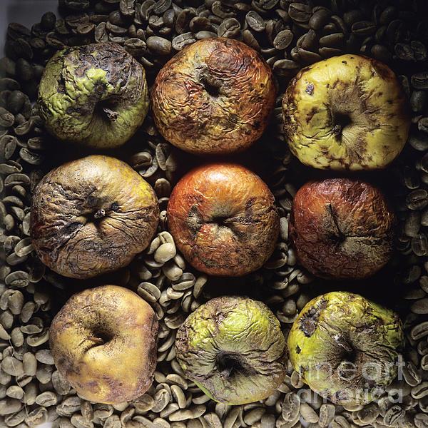 Frozen Apples Print by Bernard Jaubert