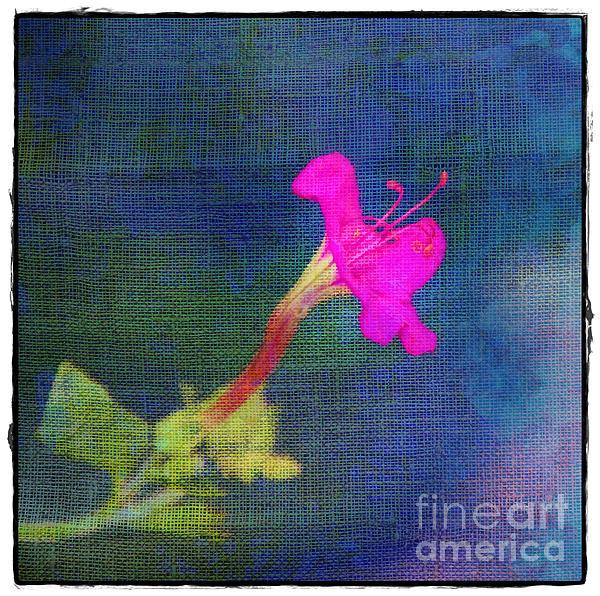 Fuchsia Flower Print by Judi Bagwell