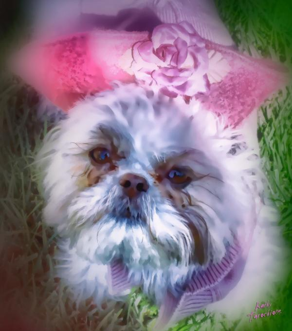 Furry Angel Photograph  - Furry Angel Fine Art Print