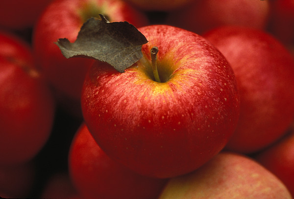 Gala Apples Print by Lyle Leduc