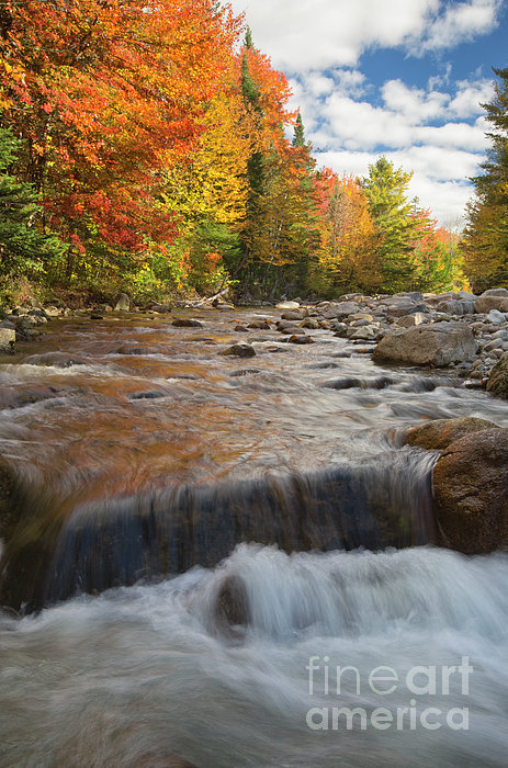 Gale River - White Mountains New Hampshire Print by Erin Paul Donovan