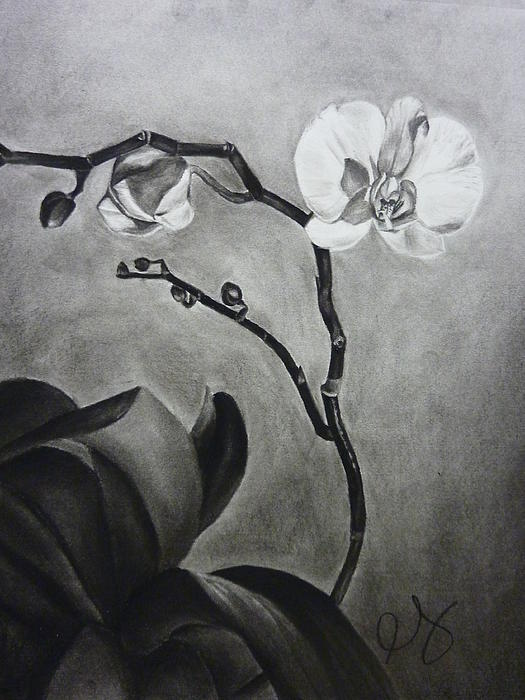 Galen's Orchid Print by Estephy Sabin Figueroa