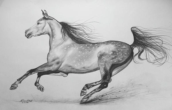 Galloping horse sketches - photo#7