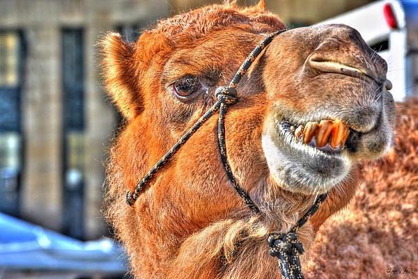 Michael Frank Jr - Gangsta Grillin THIS Camels Chillin