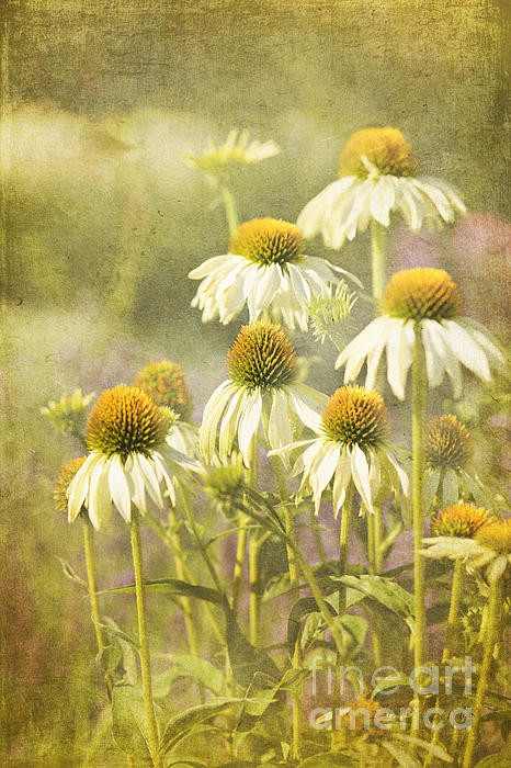 Garden Party Print by Reflective Moment Photography And Digital Art Images