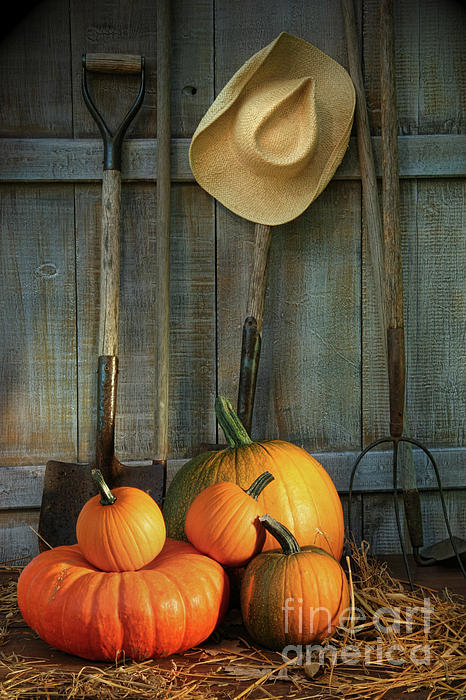 Garden Tools In Shed With Pumpkins Print by Sandra Cunningham