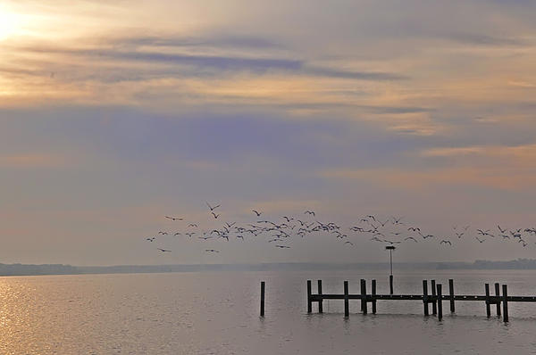 Geese Over The Chesapeake Print by Bill Cannon