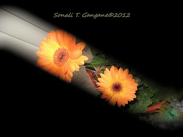 Sonali Gangane - Gerber daisy unveiled