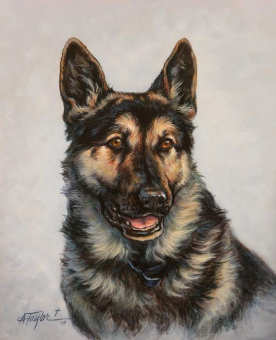German shepherd print by alice taylor