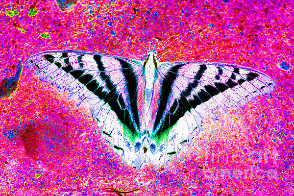 Ghost Butterfly Print by Nick Gustafson