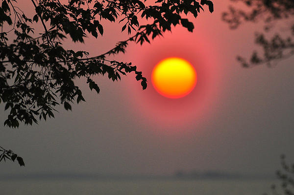 Gilded Sunrise Glow Print by Rebecca Sherman