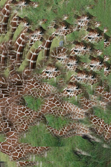 Rick Rauzi - Giraffe Mania