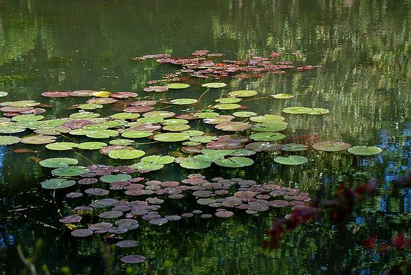 Eric Tressler - Giverny Lily Pads