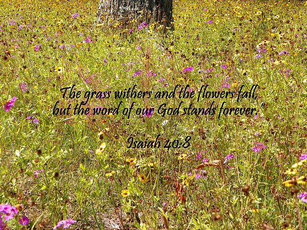 Gods Word Stands Forever Print by Sheri McLeroy
