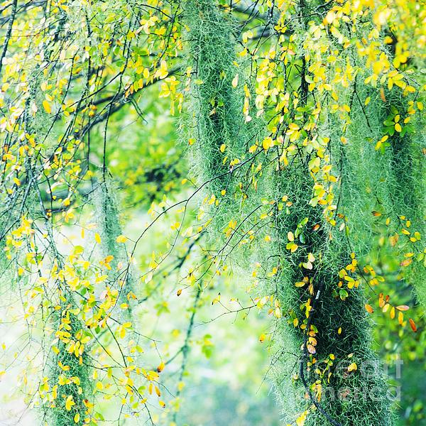Katya Horner - Going Green
