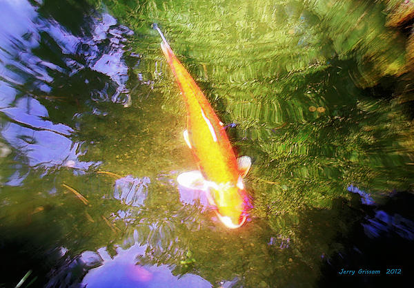 Jerry Grissom - Golden Koi with Tree Reflections
