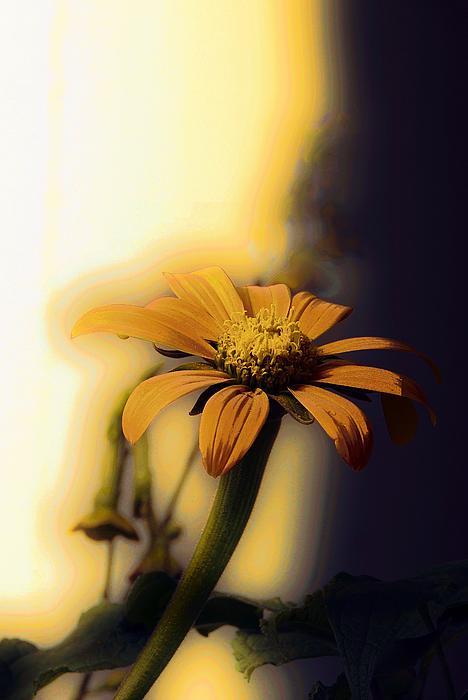 Marcia Lee Jones - Golden Light