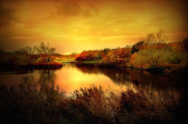 Golden Pond Print by Photodream Art