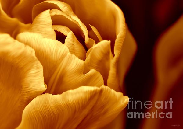 Jennie Marie Schell - Golden Ruffles Tulip Flower Macro