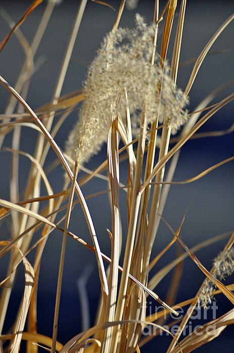 Juls Adams - Golden Winter