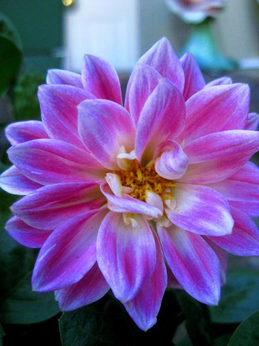 Good Morning Flower Print by Allen n LehmanGoodmorning Image Flower