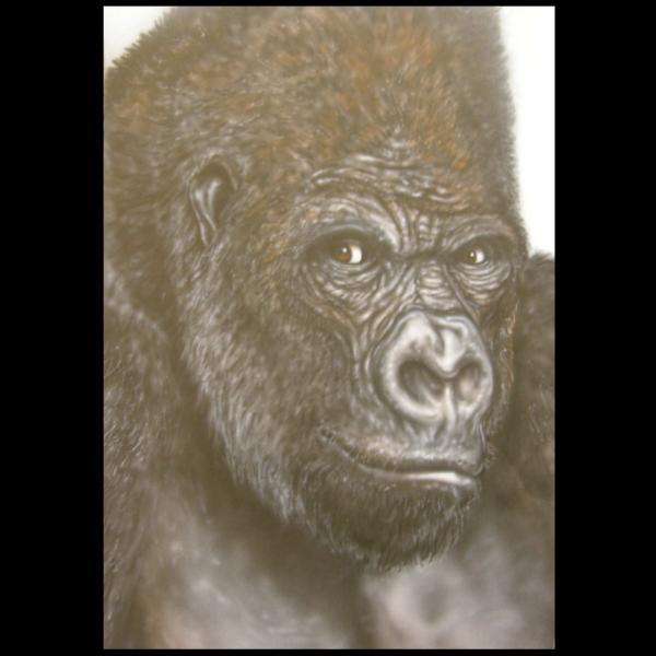 Gorilla Print by John Shook