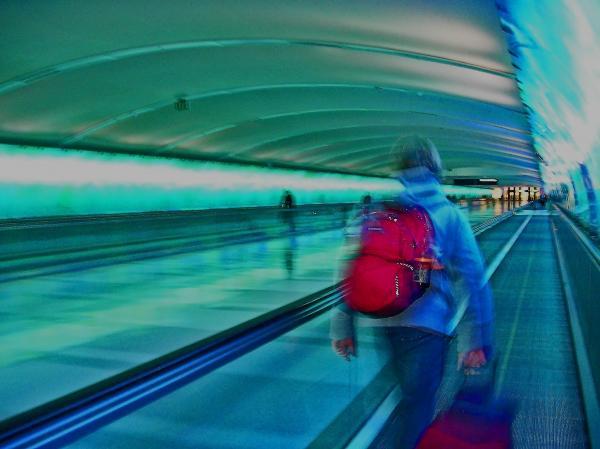 Gotta Catch My Plane Print by Elizabeth Hoskinson