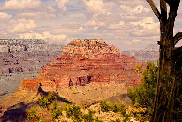 Grand Canyon - Yavapai Print by Bob and Nadine Johnston