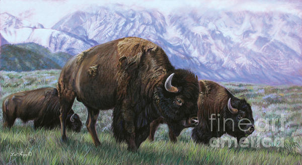 Deb LaFogg-Docherty - Grand Teton Bison