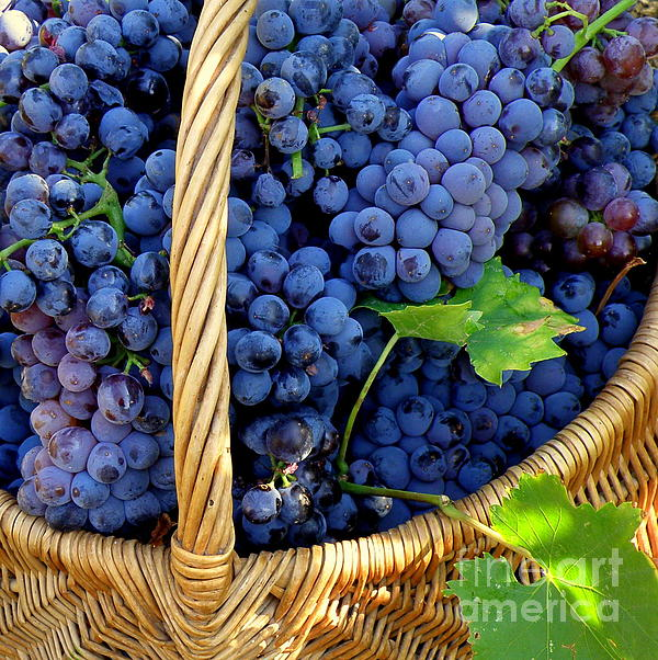 Grapes In A Basket Print by Lainie Wrightson