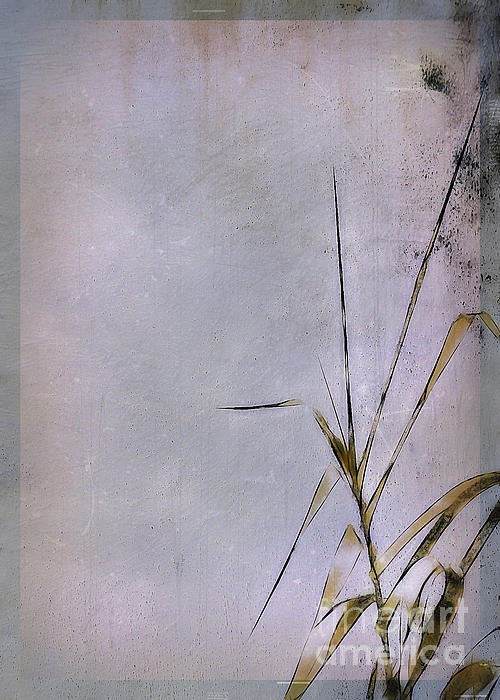 Grass And Wall Print by Judi Bagwell