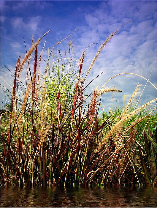 Joyce Dickens - Grasses Standing Tall