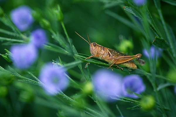 Grasshopper Print by Mike Grandmailson