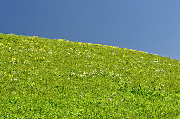 Grassy Slope View Print by Roderick Bley