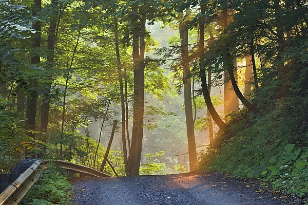 Gravel Road At Sunrise, Pelham, Ontario Print by Darwin Wiggett