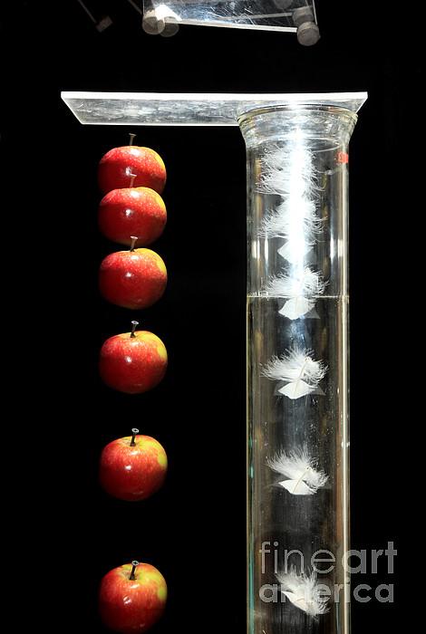 Gravity Comparison Print by Ted Kinsman