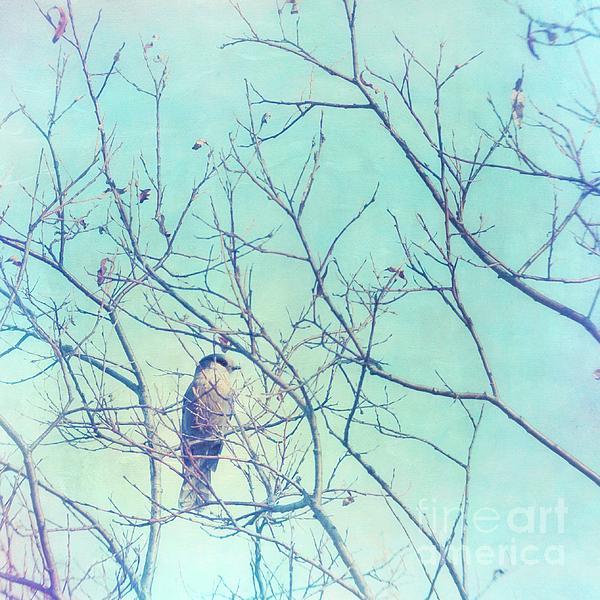 Gray Jay In A Tree Print by Priska Wettstein