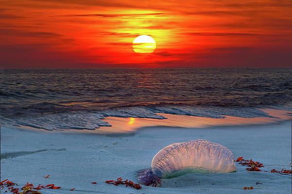 Grayton Beach Sunset IIi Print by Charles Warren