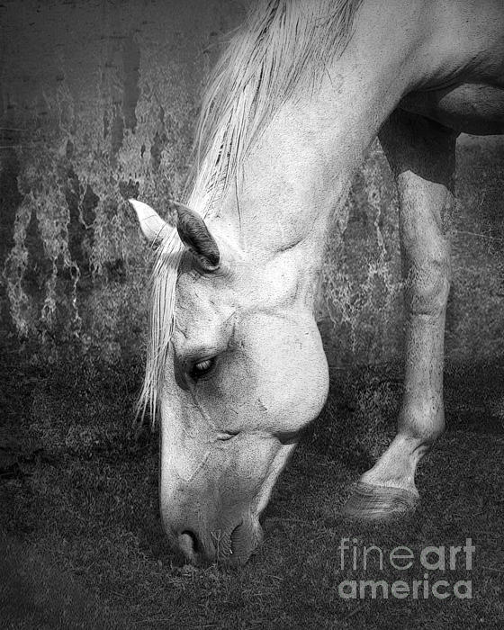Grazing In Black And White Print by Betty LaRue