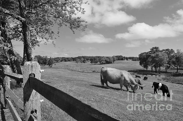 Grazing The Day Away Print by Catherine Reusch  Daley