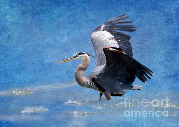 Betty LaRue - Great Blue Heron