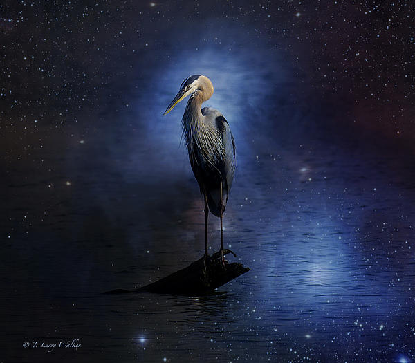 Great Blue Heron On A Starry Night Print by J Larry Walker
