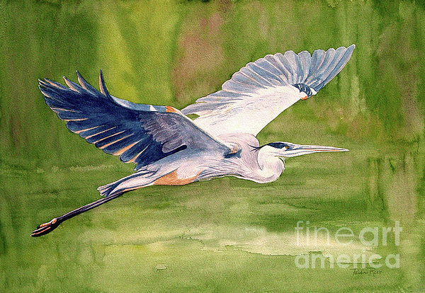 Pauline Ross - Great Blue Heron